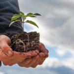 Das große Missverständnis um die Hanfpflanze